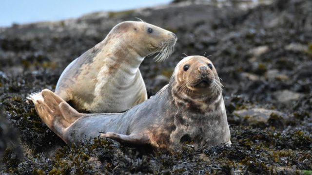 Seals DSC 6937 001